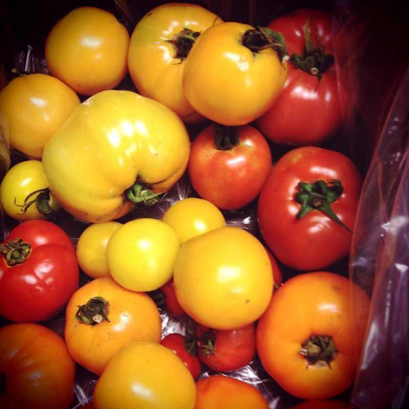 Голландские сорта томатов: описание, особенности выращивания, фото