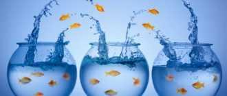 Развитие организации: методы, технологии, задачи и цели