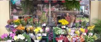 ❶ Как открыть свой цветочный магазин