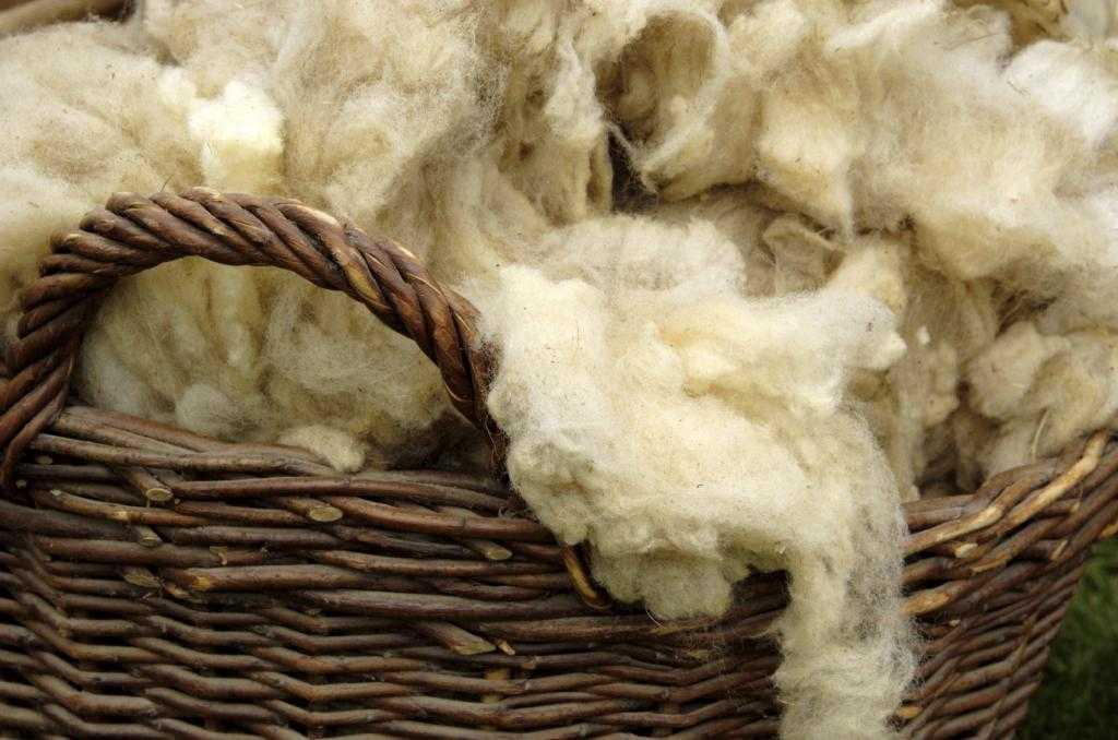 Как стригут овец: способы, сроки, подготовка животного, описание процесса