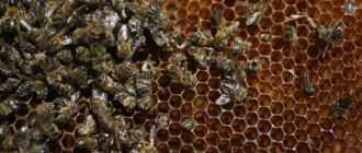 Содержание пчел в многокорпусных ульях: технология и методы